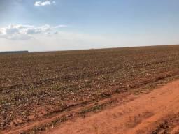 175 hectares,Sapezal,100% lavoura, soja e algodão