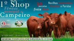 (63bu) Shop Senepol PO - Touros Reprodutores elite em 30 vezes