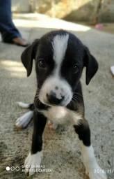 Cachorrinho 45 dias