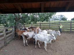 Vacas 30.000,00