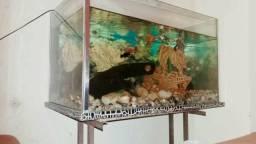 Vendo aquário grande ou troco