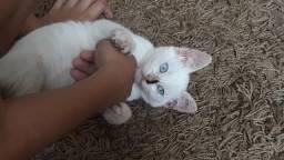 Doação dessa linda gatinha