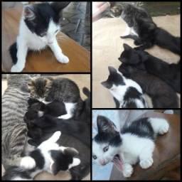 Lindos gatos doação