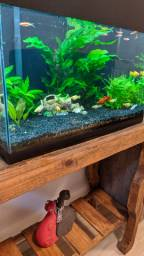 Vendo aquário completo (Toledo)