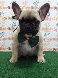 Título do anúncio: Bulldogue francês Filhotes Top