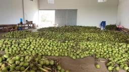 Título do anúncio: Coco direto do nordeste, coco gigante água docinha