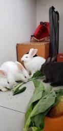 Título do anúncio: Lindos filhotes de coelhos
