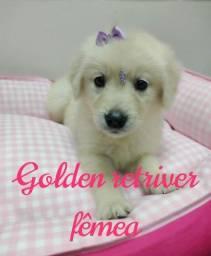 Título do anúncio: GOLDEN Retriver Fêmea linda Parcelamos