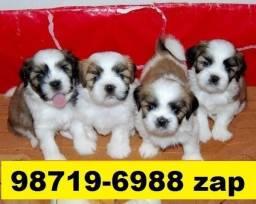 Canil Lindos Filhotes Cães BH Lhasa Poodle Yorkshire Shihtzu Bulldog Maltês