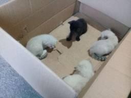 Preciso urgente de doar 3 filhotes de gatinho 1 mê