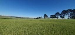 Vende-se Fazenda de 600 Alqueires na região de Ortigueira - Pr