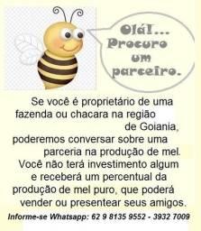 Procuro - parceiro para apicultura -