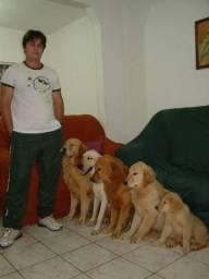 Adestramento e hospedagem para cães