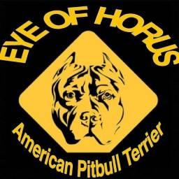 Título do anúncio: Preciso de tratador de cães para trabalhar com a raça Pitbull.