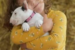 Título do anúncio: Perfeitos filhotes de Bull Terrier