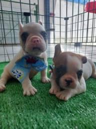 Título do anúncio: Lindos Filhotes de Bulldog Francês