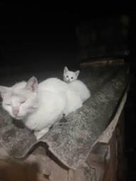 Gatinhos abandonados