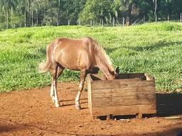 Ótimo cavalo