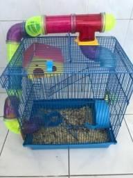 Filhote Hamster-chinêss com Gaiola
