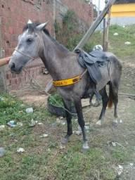 Cavalo ROXO