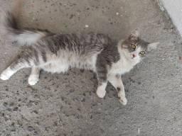 Gato perdido ou abandonado no bairro Fortaleza Alta