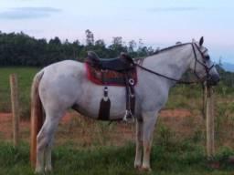 Égua e potra mangalarga marchador