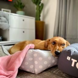 Doação de Cachorro SRD Fêmea 2 Anos 16Kg