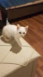 Título do anúncio: Doação gatinho filhote macho