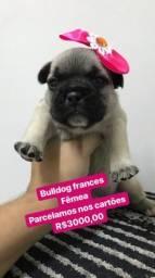 Bulldog frances lindos
