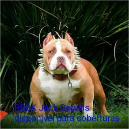American Bully pocket para coberturas