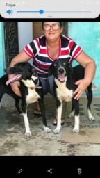 Essas duas cachorra estão pra doação