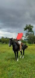 Título do anúncio: Égua crioula pura