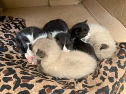 Título do anúncio: Doasse gatinhos recem nascidos