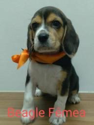 Beagle essa fofa está super animada para um novo lar, venha conferir