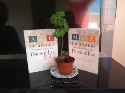 Dicionário Internacional de Psicanálise