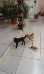 Cachorros Macho e fêmea