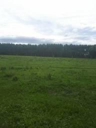 Sítio de 1 hectare em Capela de Santana / Financio direto /