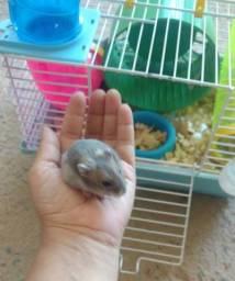Gaiola com casal de hamster