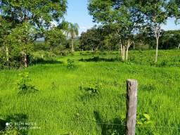 Fazenda 121 hectares