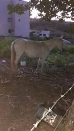 Vendo egua MM