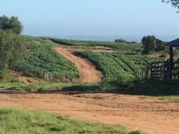 Fazenda Canguçu 255ha plantando soja 170 hectares 13.500,00 o ha!