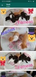 Doação  lindos gatinhos  ainda tem  4 corra