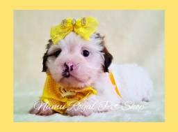 Título do anúncio: Lhasa fêmea - bebê de alta qualidade no Namu Royal - fotos originais