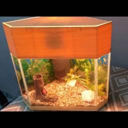 Vendo aquário de capacidade de 12 L completo