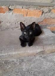 Título do anúncio: Gato para adoção