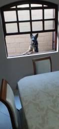 Título do anúncio: Cachorro Macho Pastor Alemao