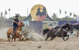 Título do anúncio: Cavalo de Direita a Venda