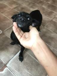 Vendo essa linda cachorra Salsicha com pinscher