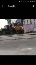 .Pra vender logo egua macia