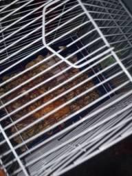 Vendo hamster
